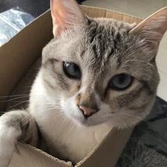 愛おしい存在/愛猫/親バカ飼い主/保護猫 箱入り息子❣️ イケメン😍💕💕