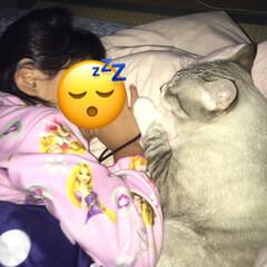 癒される/猫との暮らし/保護猫ちゃん おはようございます☀ 今朝も少し寒くて布…
