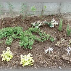 オレガノ/セージ/タイム/ローズマリー/ハーブ お庭の一角のハーブエリア