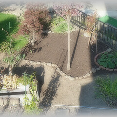 土/水/雨/天気/気温/芝/... 四区画目芝床は種蒔き培養土と砂を混ぜた物…