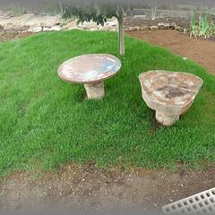 濃緑/グリーン/発芽/たくさん/艶やか/早い/... 二区画目の土は芝床土に種蒔き用の培養土を…