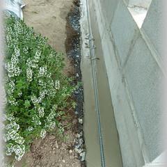 敷きレンガ/下地/基礎/アンティークレンガ/DIY/鉄筋/... 敷きレンガの下地にはいつも鉄筋を入れてい…