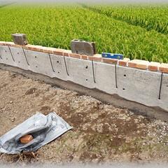 基礎造り/鉄筋/配筋/ブロック塀 基礎高450㎜、上側130㎜、下側25㎜…