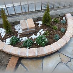 コニファー/植栽/花壇 季節は冬 寒さに強い花木 寒冷地でも冬越…