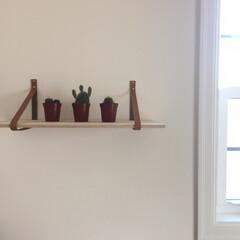 暮らしの知恵/レザーベルト/グリーのある暮らし/サボテン/インテリア/DIY/... IKEAのミニサボテン3セット。 とても…