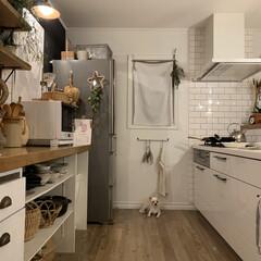 チワワ/いぬのいる暮らし/インテリア/キッチン雑貨/住まい/暮らし/... 最近は夕飯を作っているとキッチンに立つ私…(1枚目)