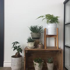 緑のある暮らし/インドアグリーン/植物/グリーン/インテリア/雑貨/... お部屋の一角にグリーンを追加! 花台を使…(1枚目)