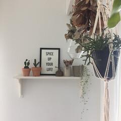 インドアグリーン/観葉植物/ドライフラワー/アンティーク雑貨/サボテン/IKEA/... 我が家の飾り棚。 これはIKEAで自分で…(1枚目)