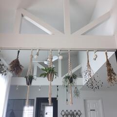 生活の知恵/2階リビング/注文住宅/勾配天井/インドアグリーン/グリーンハンギング/... 2階リビングの良さについて。 我が家は明…