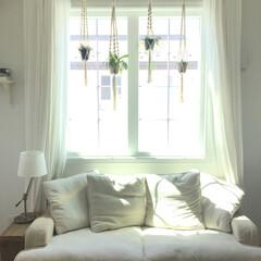 植物のある暮らし/グリーン/グリーンハンギング/インテリア 日中だけでもグリーンハンギングを窓際に移…