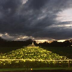 成田ゆめ牧場/イルミネーション/旅の景色フォトコンテスト/おでかけ/風景/旅行/... 成田ゆめ牧場のイルミネーション。 野菜の…