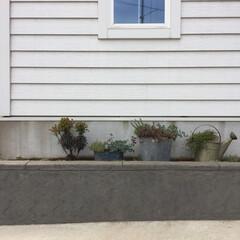 ブリキ/多肉植物/暮らしの知恵/植物/インテリア/雑貨/... 玄関周りの植物。 ここは北側なので日のあ…