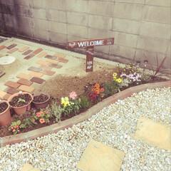 庭/ガーデニング/ヒマワリ/アサガオ/カラーリーフ/かすみ草/... 前回作ったアイテムを庭に置きました☆ 1…