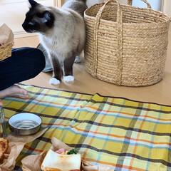 ステイホーム/ピクニック気分/おうちピクニック/お昼ごはん/おうち時間/キッチン雑貨/... おうちピクニック(๑´▿︎`๑)♫︎*.…(6枚目)