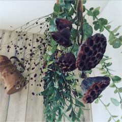ドライフラワー/グリーン/フェイクグリーン/蓮の花種/ワレモコウ ドライフラワーとフェイクグリーン( ˊᵕ…
