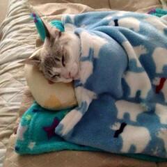 おやすみショット 寒いから毛布を…