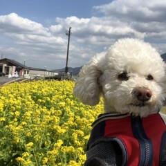 道の駅/春/ペット/犬/おでかけ/小さい春 何度も1面に広がる道の駅にて!