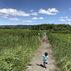 青と緑のコントラスト/自転車の特訓/夏の思い出 実家に帰省中、長男の自転車の補助輪を外し…