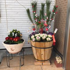 正月飾り 毎年、葉牡丹が出だしたら植えておいてそれ…(1枚目)