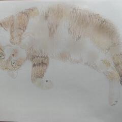 お絵描き/うちの猫/にゃんこ同好会/おうち時間 お絵かきが楽しい😊  ファイヤアルパカ …