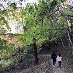 カメラ散歩/カメラ女子/紅葉/お散歩/ハイキング/リミアの冬暮らし/... 紅葉を楽しみながら♪