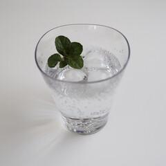 ミント/ハーブ/炭酸水/キッチン雑貨/キッチン/雑貨/... 【ゆらぎタンブラー】 そろそろ炭酸が飲み…