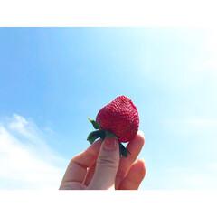 青空/コストコ/バーベキュー/いちご/ありがとう平成/令和の一枚/... 青空には何でも映える~♪
