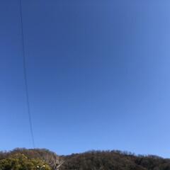 冬空/お天気/青空/フォロー大歓迎/おでかけ/風景 暖かい週末でした🌞