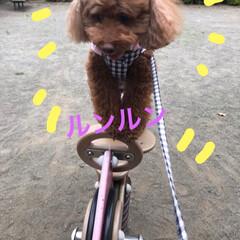 わんこ同好会 公園にて3(2枚目)