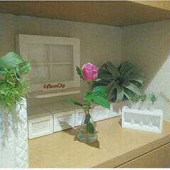 一輪挿し/薔薇/Aoyama Flower Market/青山フラワーマーケット うちの玄関!  1輪の薔薇…  青山フラ…