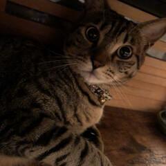 ペット/びっくり顔w テーブルの下で…(*´罒`*)❤