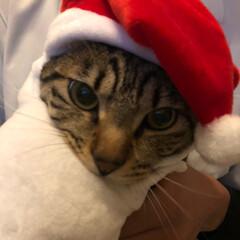 かぶりものねこ/観覧車/ペット/猫/クリスマスツリー/クリスマス こんばんは❤ 先日のphotoへの コメ…(3枚目)