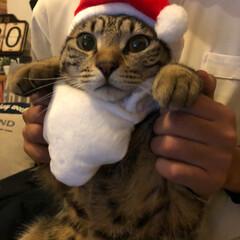 かぶりものねこ/観覧車/ペット/猫/クリスマスツリー/クリスマス こんばんは❤ 先日のphotoへの コメ…(2枚目)
