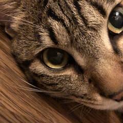 癒し猫/ドアップ/ペット おはよーございます(≧∇≦)❤ 大阪は …