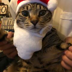 かぶりものねこ/観覧車/ペット/猫/クリスマスツリー/クリスマス こんばんは❤ 先日のphotoへの コメ…