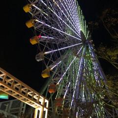 かぶりものねこ/観覧車/ペット/猫/クリスマスツリー/クリスマス こんばんは❤ 先日のphotoへの コメ…(6枚目)