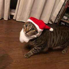 かぶりものねこ/観覧車/ペット/猫/クリスマスツリー/クリスマス こんばんは❤ 先日のphotoへの コメ…(4枚目)