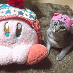 猫カービィ/かぶせ物/カービィ/LIMIAペット同好会/フォロー大歓迎/ペット仲間募集/... 猫カービィ🤣 はい!無理くり被らされてま…