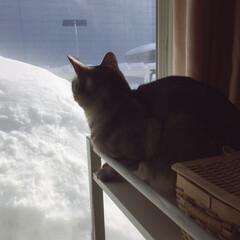 ニャルソック/窓際の猫/LIMIAペット同好会/フォロー大歓迎/はじめてフォト投稿/ペット/... (2枚目)
