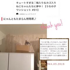 冷蔵庫の猫/オス猫/LIMIAトレンドライフ/アイデア特集に掲載ありがとうございます!/LIMIAペット同好会/フォロー大歓迎/... LIMIA公式アカウント、LIMIAトレ…