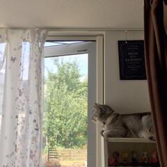 ニャンテリア/窓辺の猫/ニャルソック/猫/猫派/フォロー大歓迎/... ニャルソック! お疲れ様です😆
