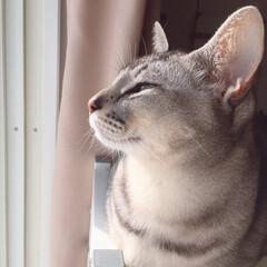 ニャルソック/窓際の猫/LIMIAペット同好会/フォロー大歓迎/はじめてフォト投稿/ペット/...