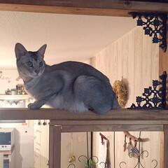 パーテーション上の猫/猫と暮らすインテリア/ねこ/猫派/フォロー大歓迎/LIMIAペット同好会/...