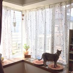出窓と猫/猫/猫と暮らすインテリア/フォロー大歓迎/LIMIAペット同好会/にゃんこ同好会/...