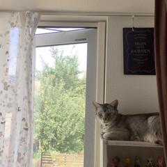 ニャンテリア/窓辺の猫/ニャルソック/猫/猫派/フォロー大歓迎/... ニャルソック! お疲れ様です😆(2枚目)