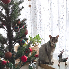 クリスマスバージョンの首輪/ハンドメイドの首輪/ニトリのクリスマスツリー/猫大好き/ニャン部/猫と暮らす/... お久しぶりです!! スマホを他社に乗り換…