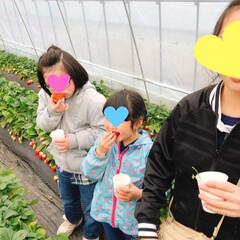 BRUNO/ジェラート/育成会/スカイベリー/食べ放題/イチゴ摘み/... 今年度最後の日🍓 本日は育成会のお楽しみ…(3枚目)
