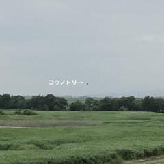 新しい生活様式/コロナに負けるな/がんばれ日本/渡良瀬遊水池/雛鳥誕生/コウノトリ 渡良瀬遊水池に飛来して住み着いたコウノト…(5枚目)