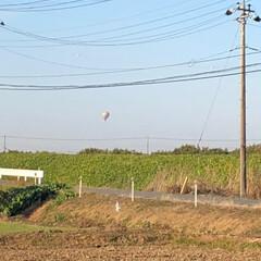 年賀状/気球/2018/風景 三女の幼稚園に送りに行く途中🚘 気球が上…