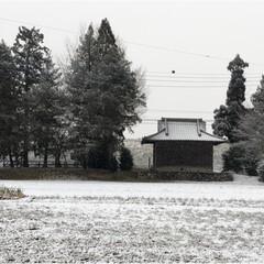 フラダンス/雪/風景 雪ですね❄️☃️❄️☃️ 我が家の前の畑…